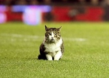 The Anfield Cat